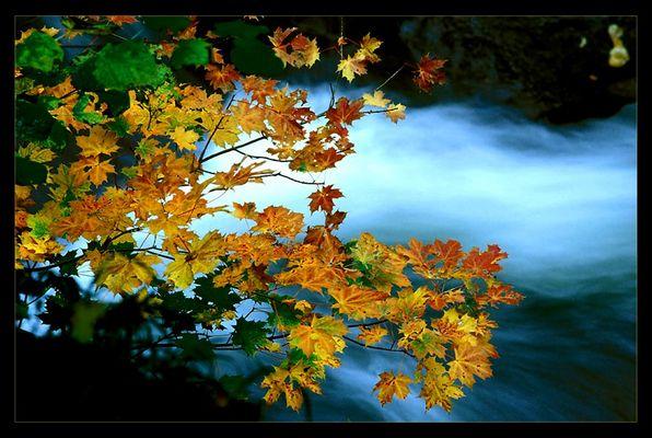 Ahornblätter vor fließendem Wasser, Bodetal, Harz