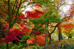 Ahorngarten im Herbst