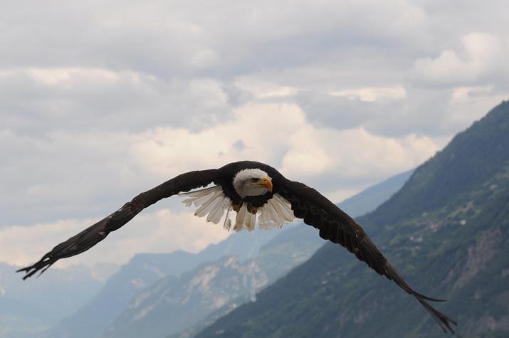 Aigle Saillon VS Swiss