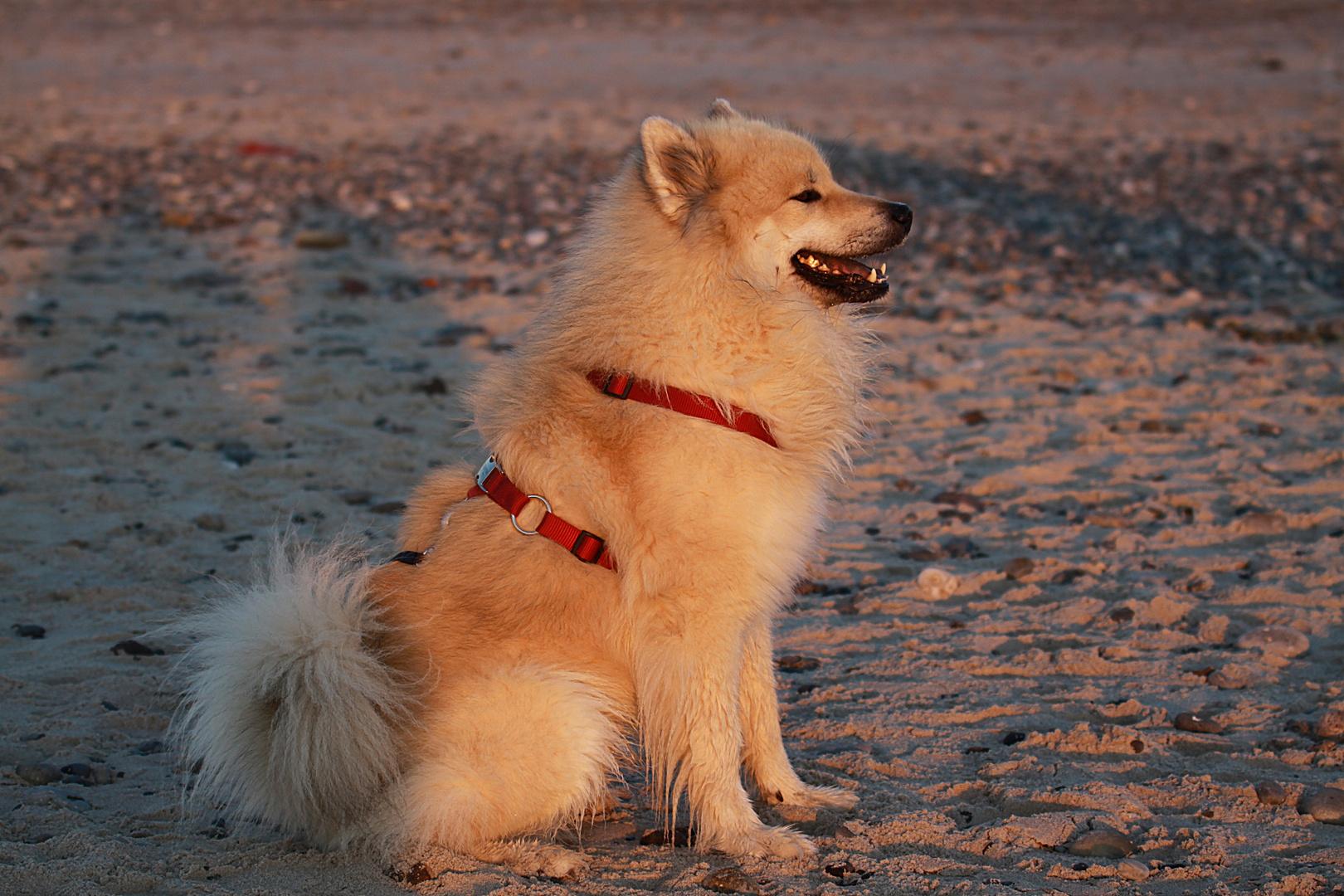 Aiko am Strand