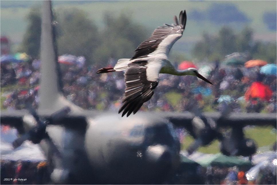 Airpower 2011 - mit Meister Adebar
