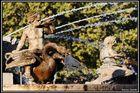 Aix en provence, Fontaine de la rotonde