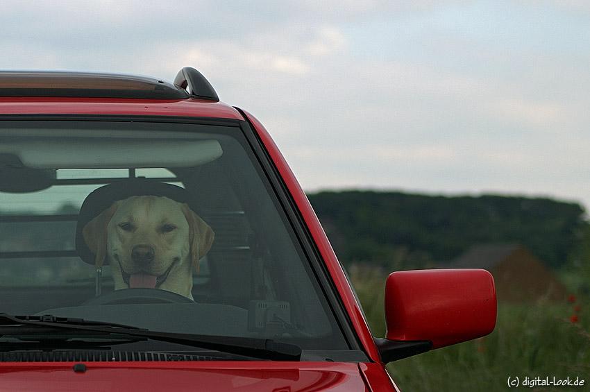 ~ A.J. als Chauffeur ~
