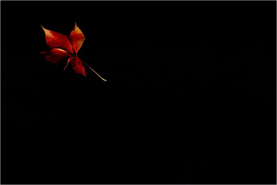 hintergrundbilder fisch schwarzer hintergrund - photo #17
