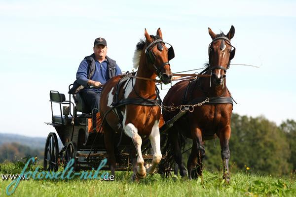 Aktion mit 2 Pferdestärken