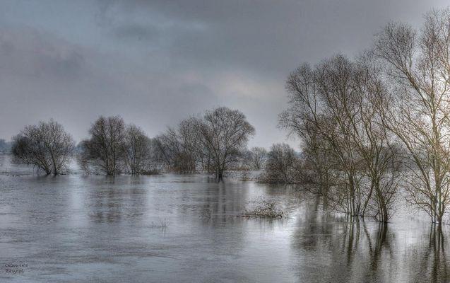 Aktuelles Hochwasser der Elbe bei Hitzacker ( Februar 2013 )