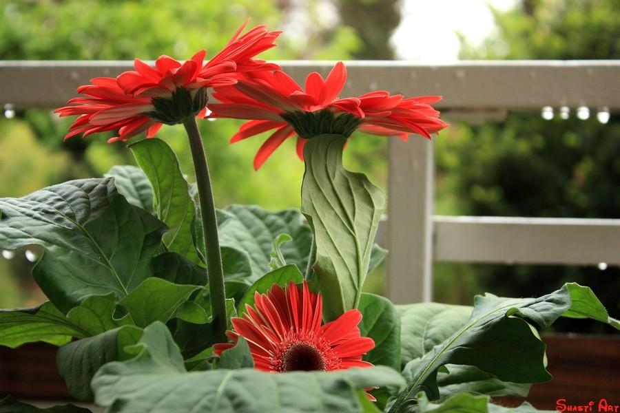 Aktuelles Regenfrühlingsblumenfoto