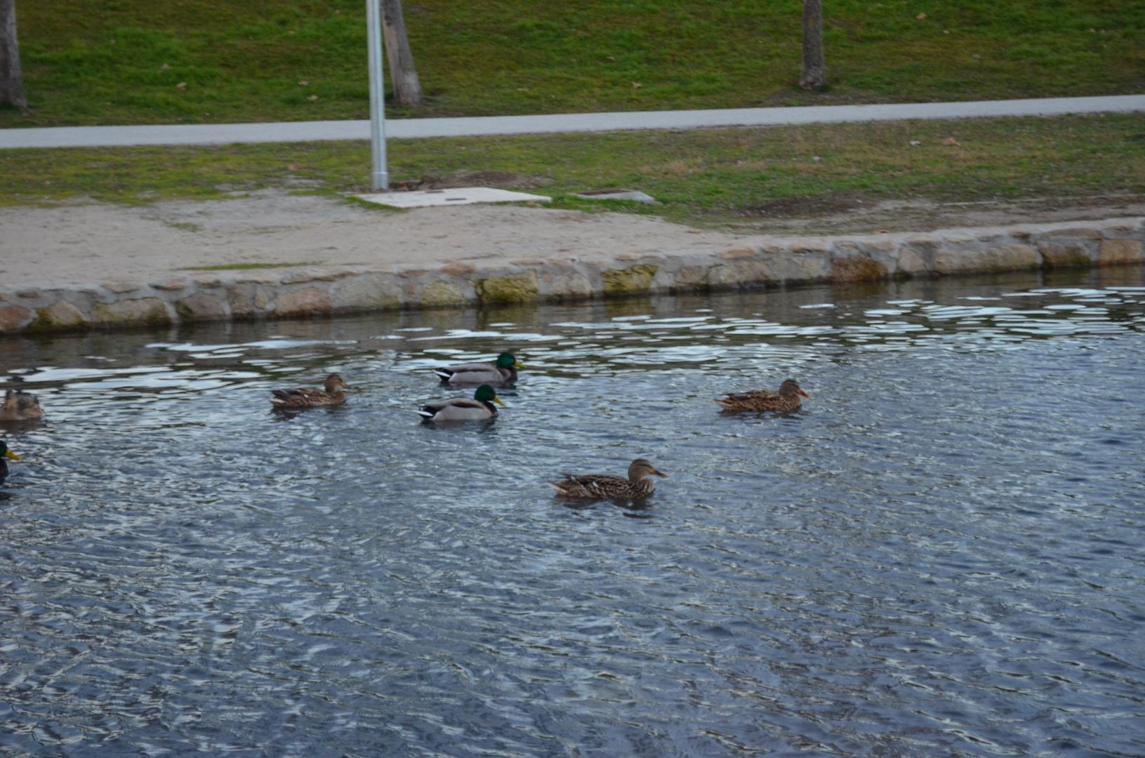Al agua Patos...:)