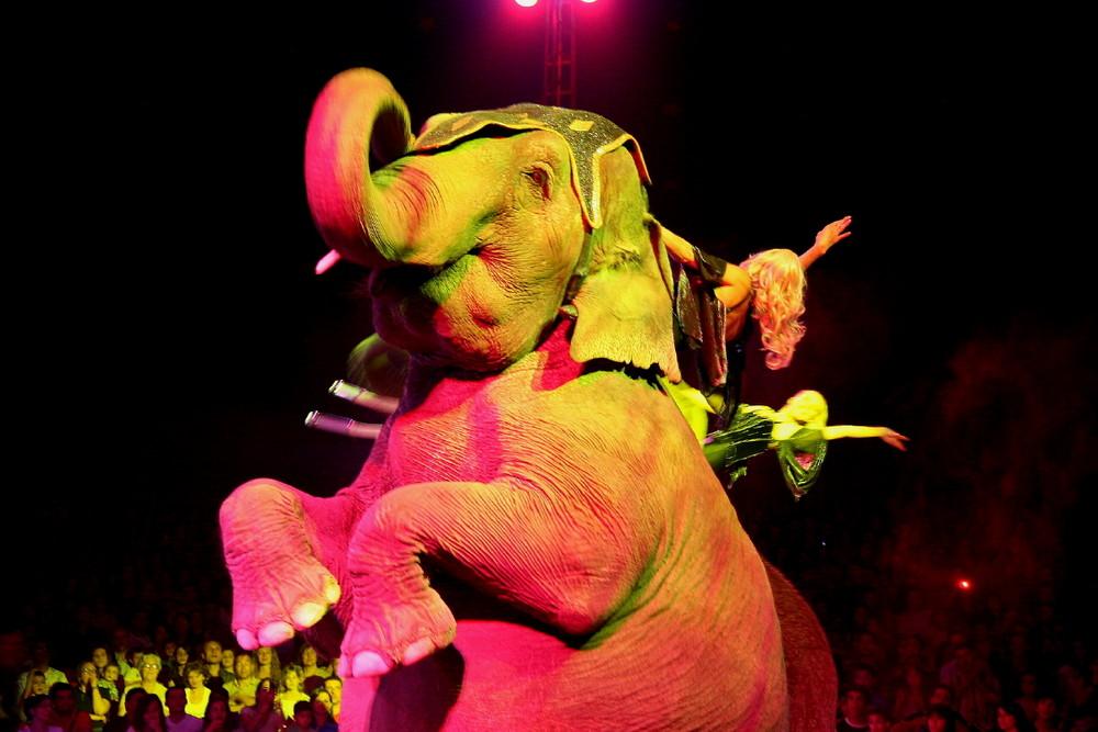 Al Circo da Moira