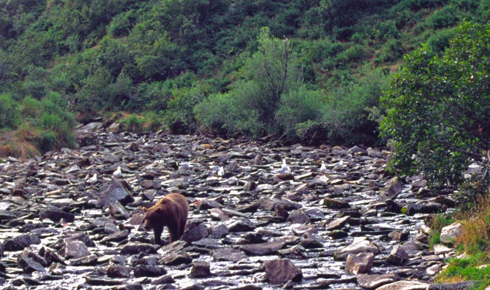 Alaska-Impressionen (41)