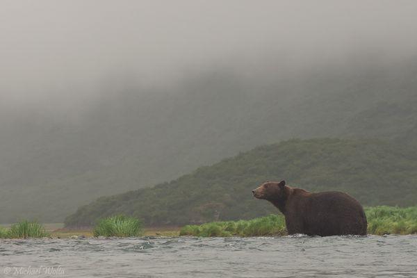 Alaskas Gletscher im Nebel
