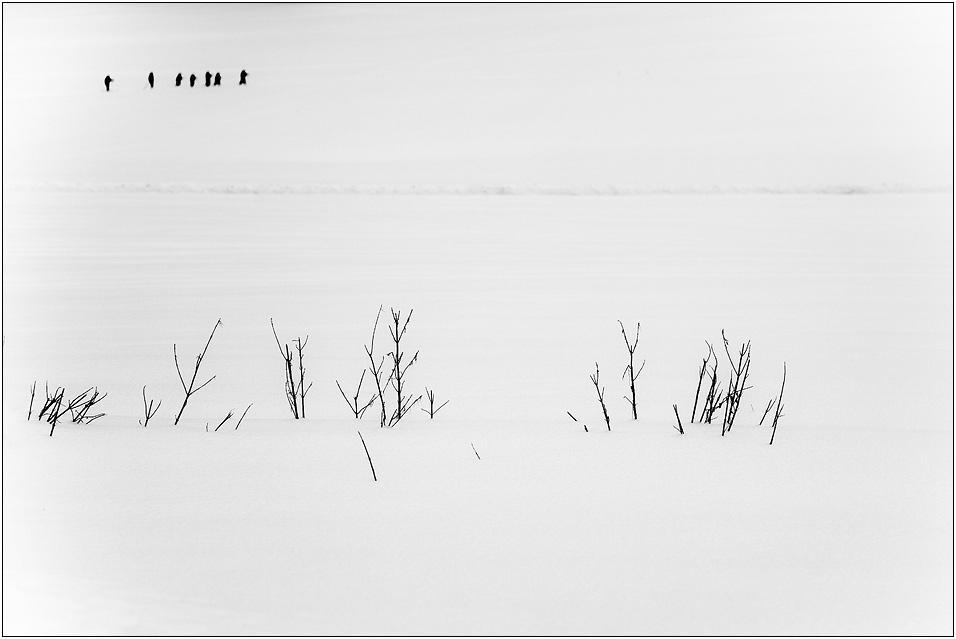 Alb.... Lauf ( II ) oder die 7 Zwerge im Schnee ....