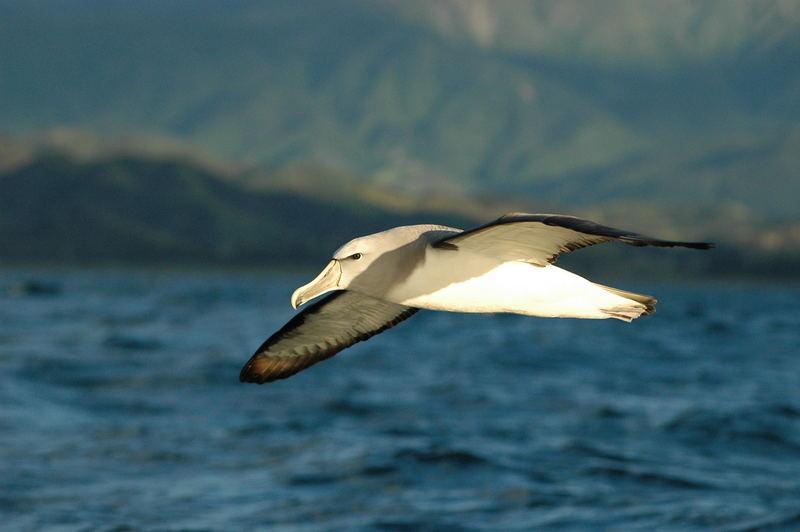 Albatros-Airlines