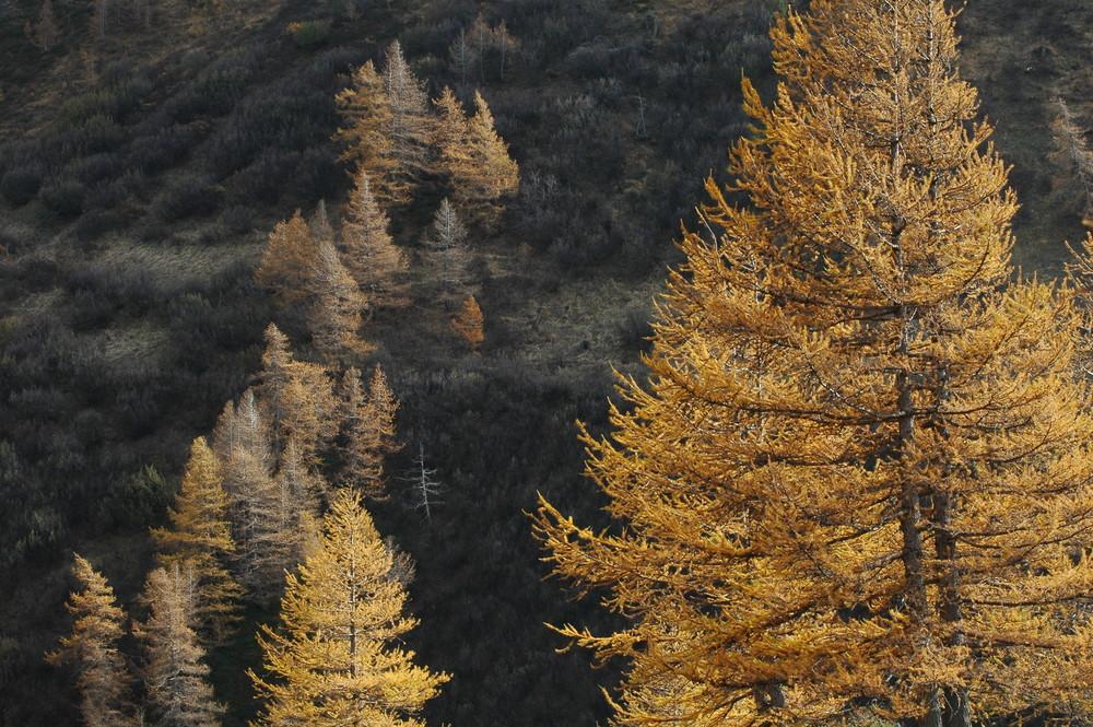 alberi di luce