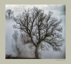 Alberi nella nebbia (1)