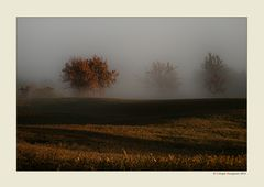 Alberi nella nebbia (13)