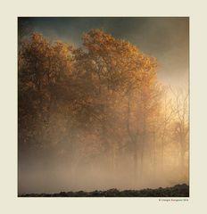 Alberi nella nebbia (16)