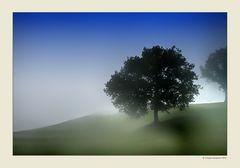 Alberi nella nebbia (17)