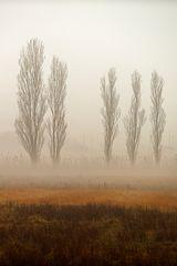 Alberi nella nebbia (18)