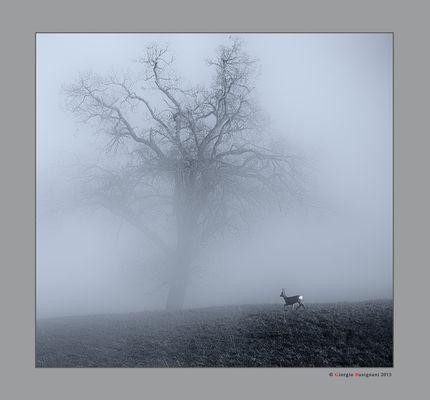 Alberi nella nebbia (2)