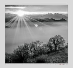 Alberi nella nebbia (7)