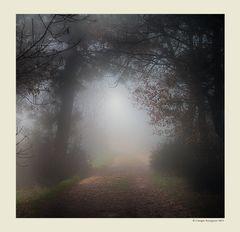 Alberi nella nebbia (8)