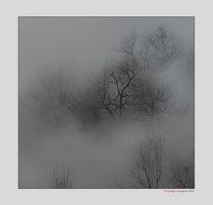Alberi nella nebbia (9)