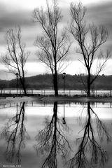 Alberi riflessi, lago di Varese