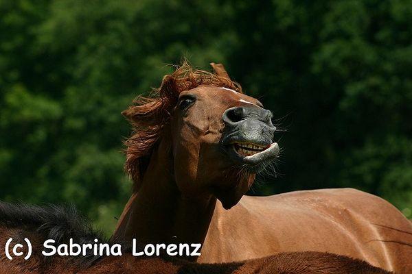*Alberners Pferd*