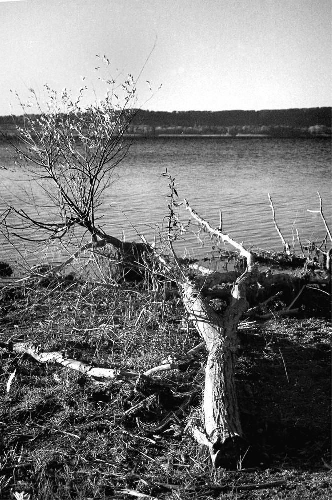 Albero cascato