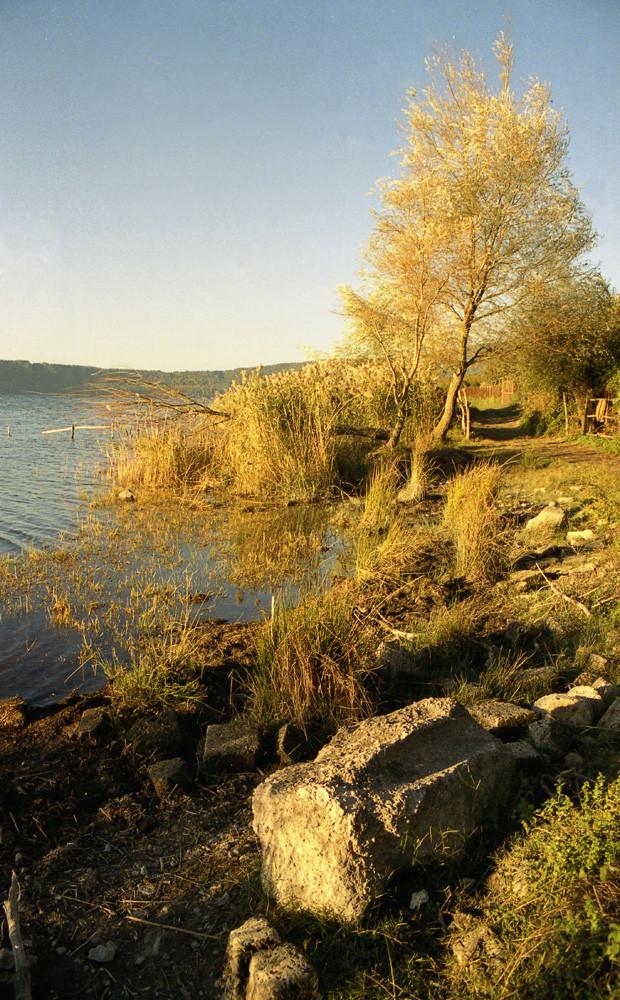 Albero con lago
