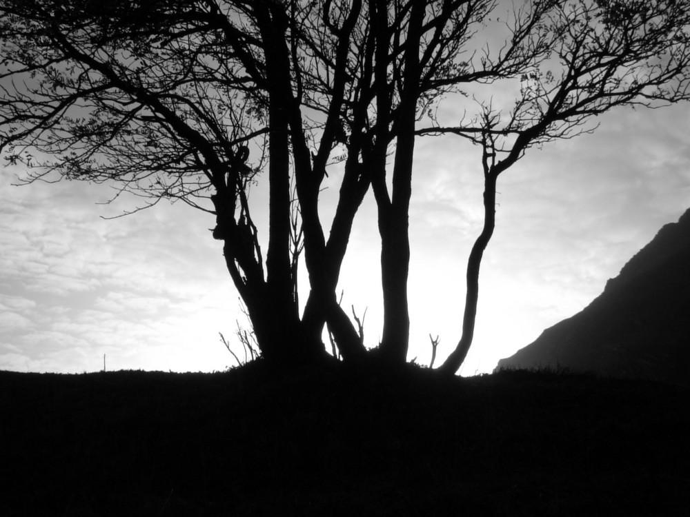 albero..