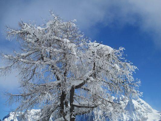Albero pieno di neve