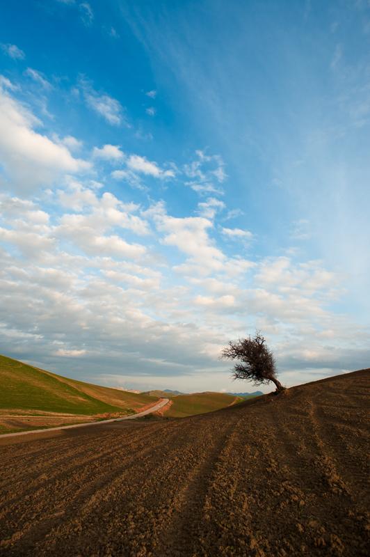albero solitario C