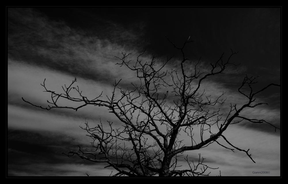 """.....albero....da """"paura"""""""