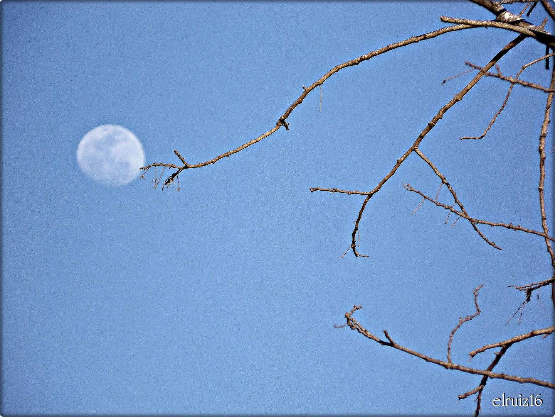 Alcanzando la Luna.