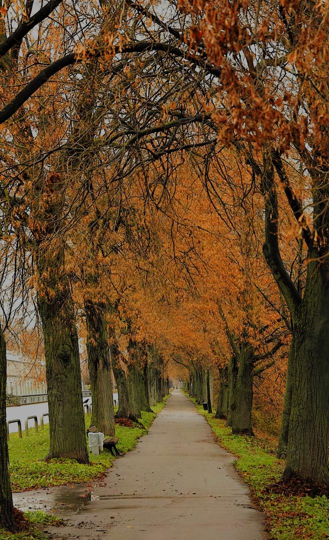 Alee des Herbstes Heilbronn am Neckar