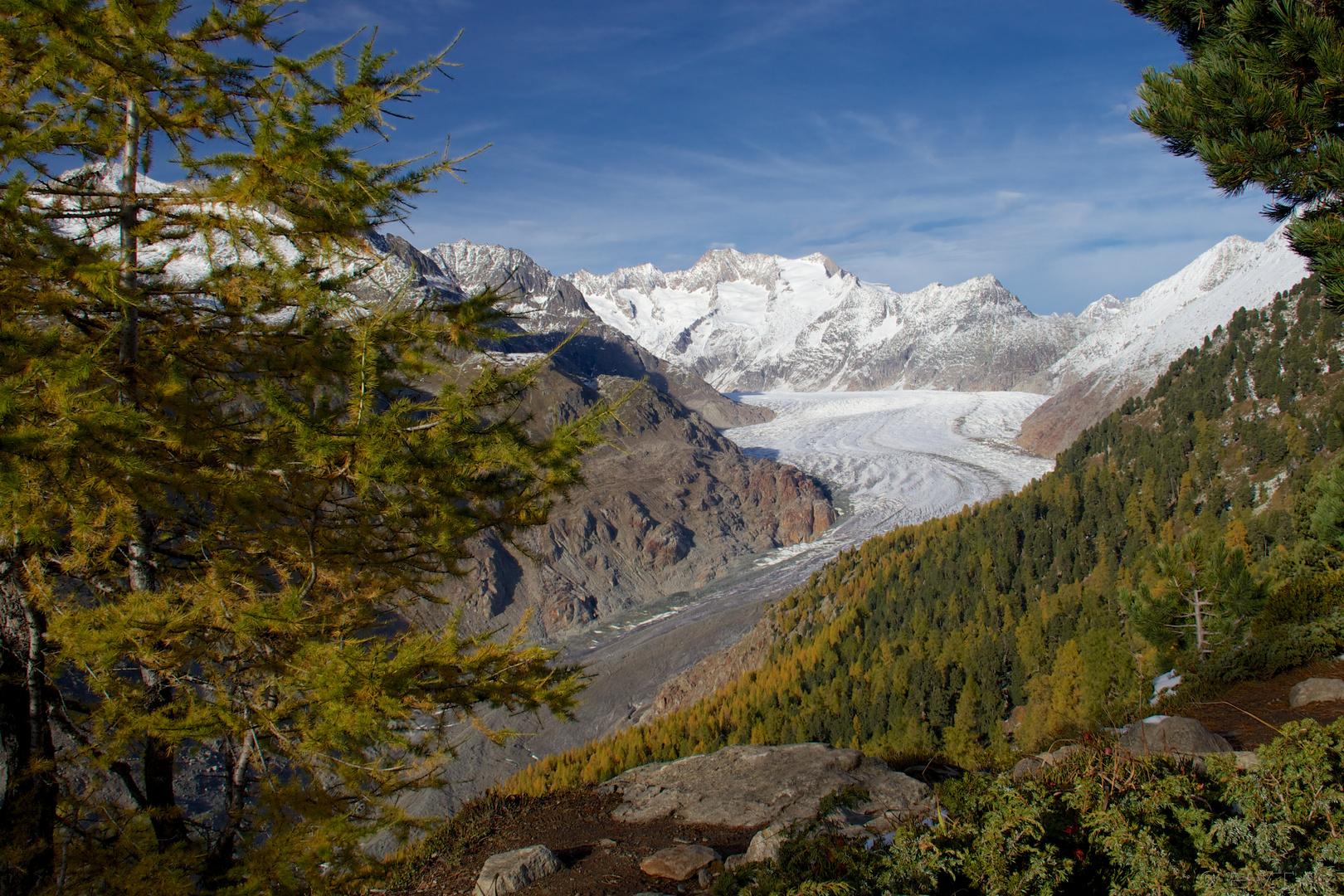 Aletschgletscher im Herbst