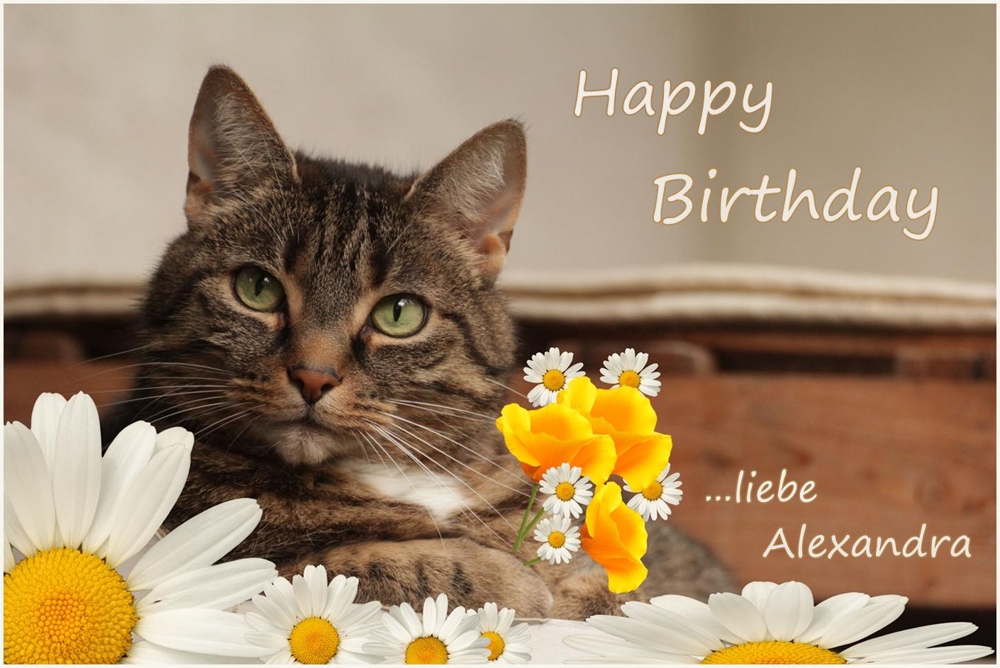 Alexandra hat geburtstag foto bild spezial katzen geburtstag bilder auf fotocommunity - Geburtstagsbilder zum 25 ...