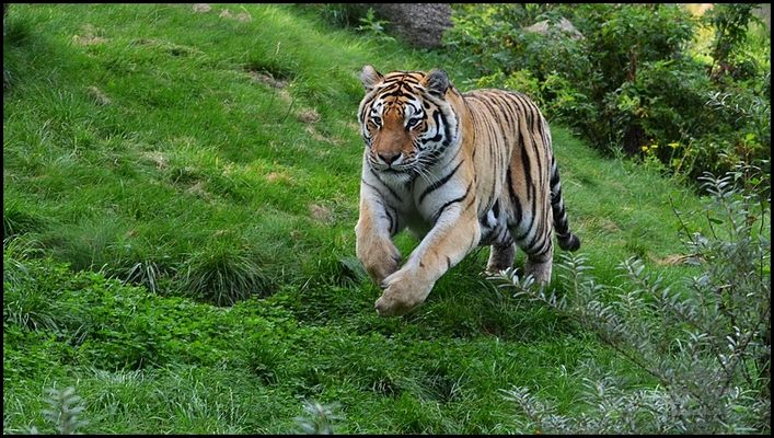 Alex...volle Tigerpower !!!!