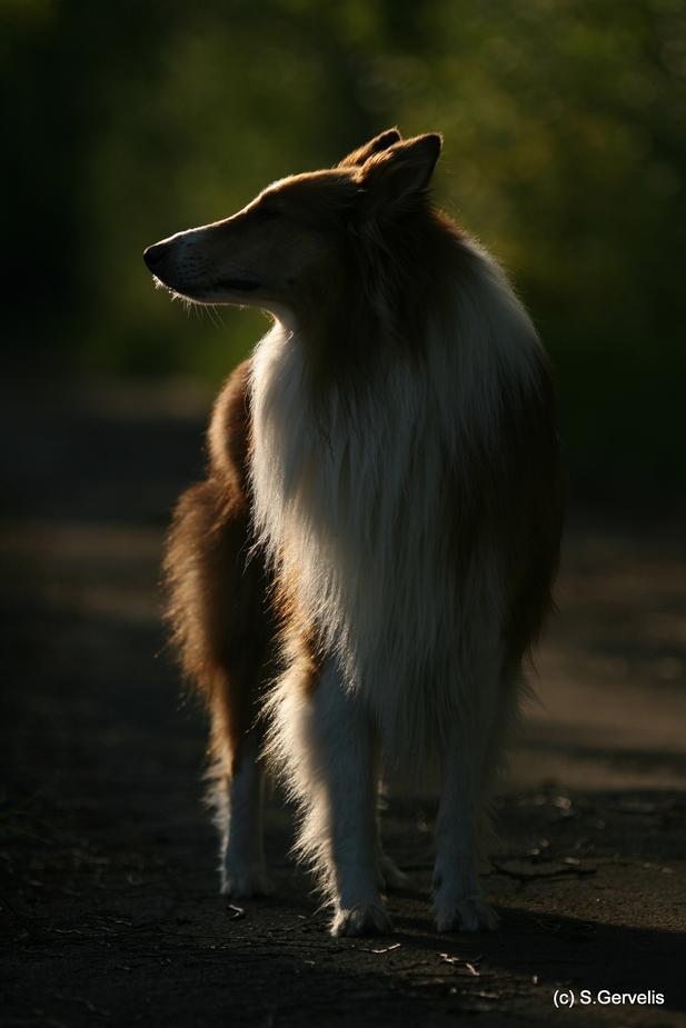 - Alf -