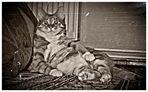 Alf, der Entspannte . . .