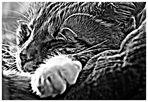 Alf, die Schlafmütze