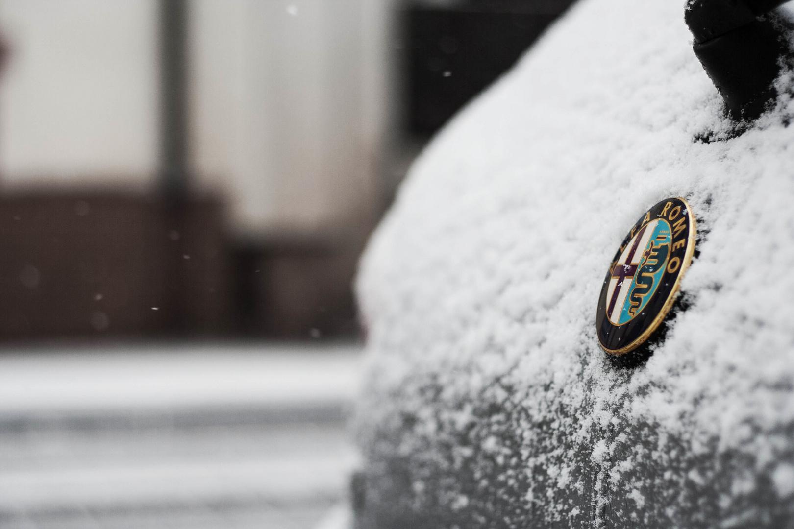 Alfatier im Schnee
