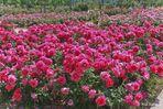 alfombra floral