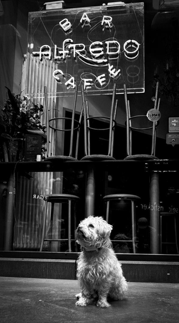 Alfredos Café