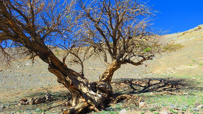 Desierto im genes y fotos for Aberturas algarrobo rosario