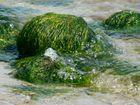 Algen auf Stein