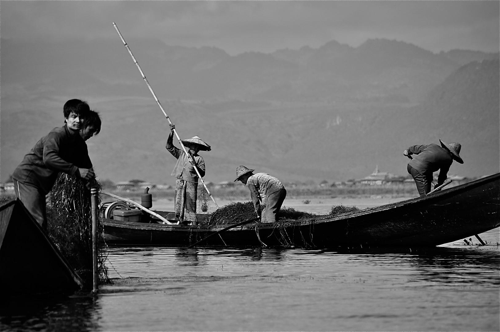 algenfischeralltag
