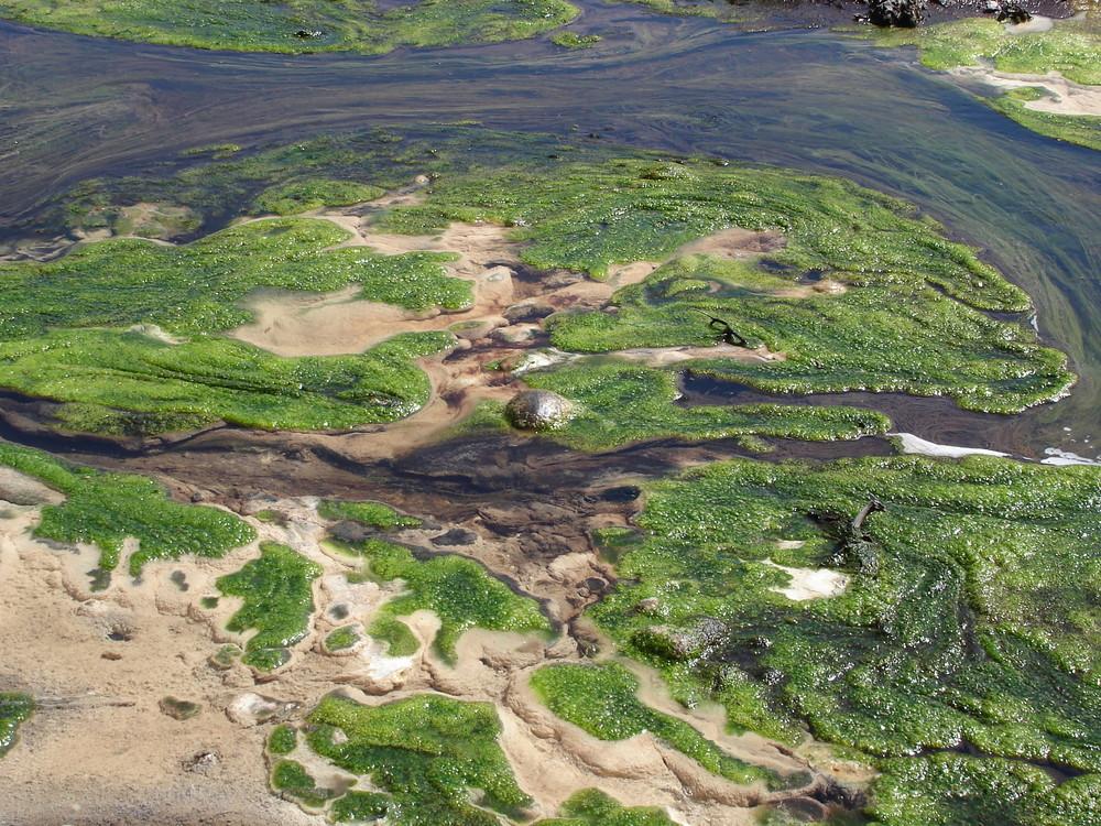 Algenwachstum Thermal Wonderland